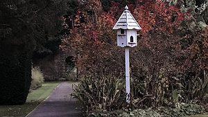England 2017 pathway and birdfeeder