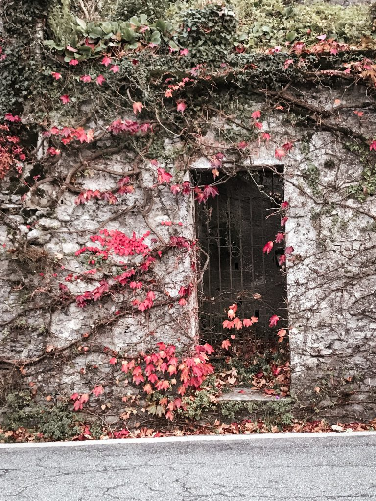 Overgrown door on Bellagio, Italy
