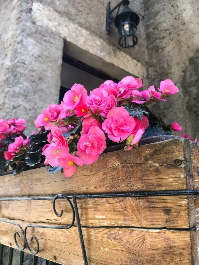 pink begonias in a flower box
