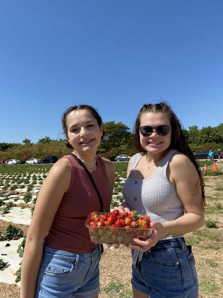 Upick Strawberries at Knaus Berry Farm