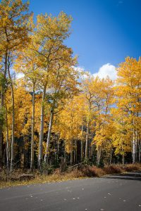 Fall Colors at Endovalley in Rocky Mountain National Park
