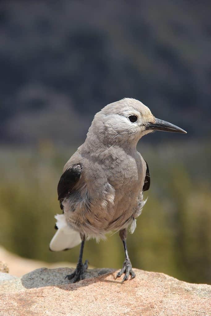 Bird in Rocky Mountain National Park