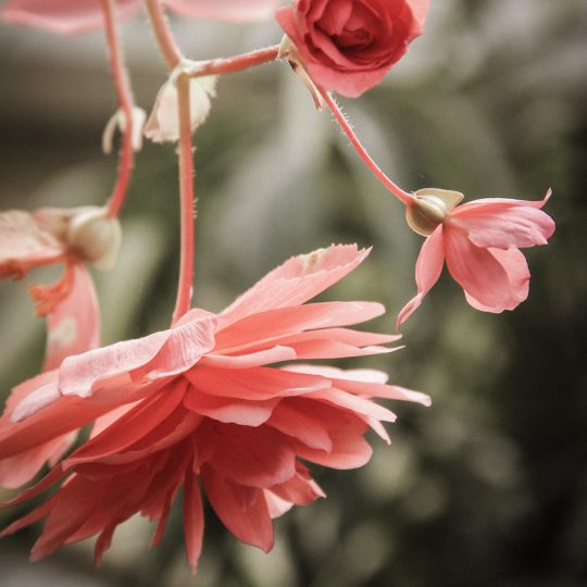 My life is my message pink flowers